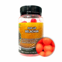 Pop-Up MG Special Carp Belachan (10-14mm) 25gr